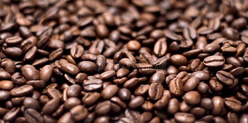 les graines de café proches de fond ont isolé la photo vers le haut du blanc photo libre de droits