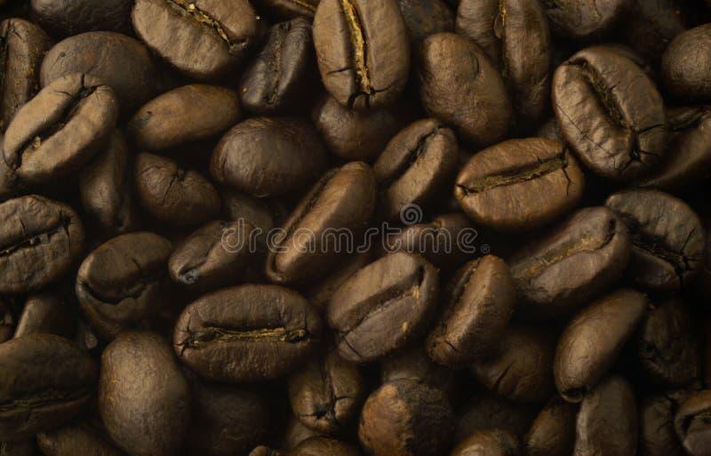 les graines de café proches de fond ont isolé la photo vers le haut du blanc image stock