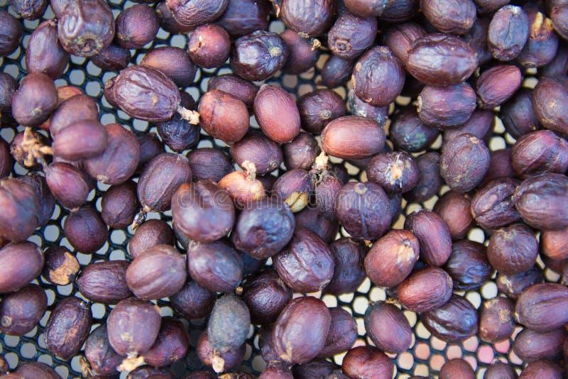 Les grains de café crus rôtissant le fond de texture, concept de café d'affaires photos stock