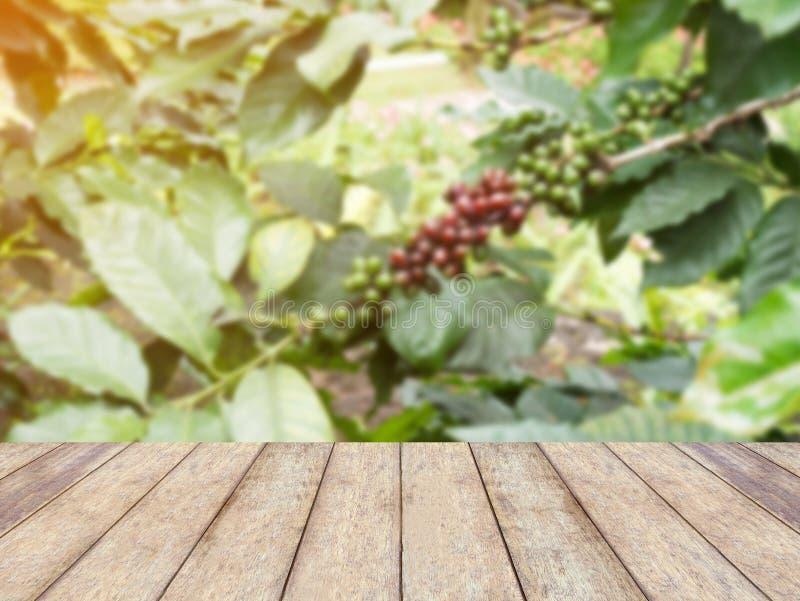 Les grains de café frais en café plante l'arbre images stock