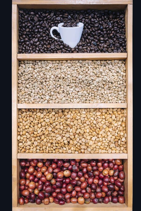 Les grains de café montrent de diverses étapes de vert de torréfaction à l'obscurité rôties image stock
