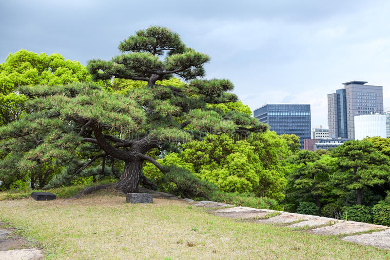 Les grands arbres verts sont dans le côté oriental du Nishinomaru du château d'Edo La salle de Chiyoda de la ville de Tokyo photo stock
