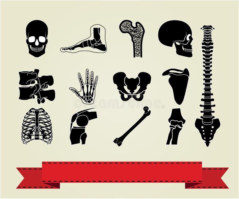 Les graphismes d'anatomie ont placé 2 illustration stock