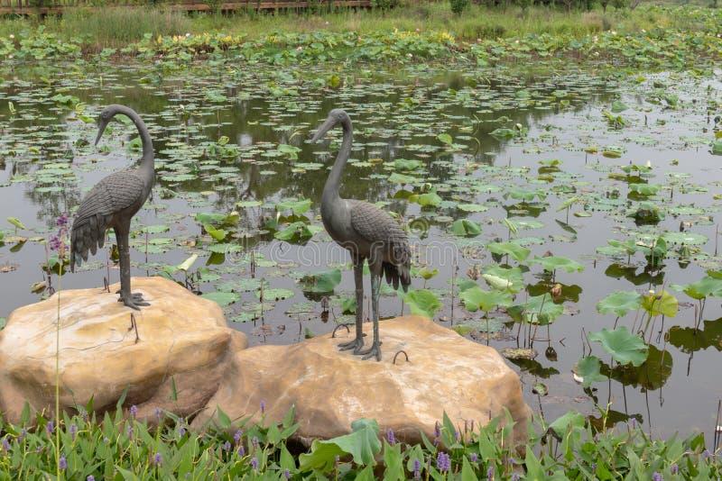 Les grues découper-Nan-Tchang de cuivre aiment le parc de marécage de lac photos stock