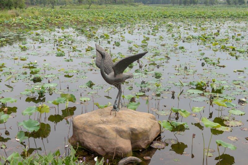 Les grues découper-Nan-Tchang de cuivre aiment le parc de marécage de lac images stock