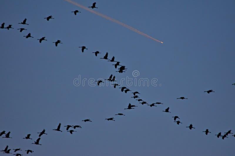 Les grues volent au-dessus de Szeged, Hongrie photographie stock