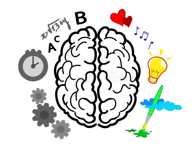 Les hémisphères de cerveau illustration libre de droits