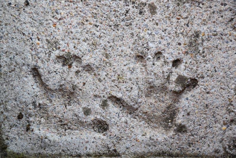 Les handprints de Childréglés en béton photographie stock libre de droits