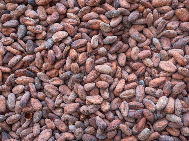 Les haricots de cacao s'étendent à plat photo libre de droits