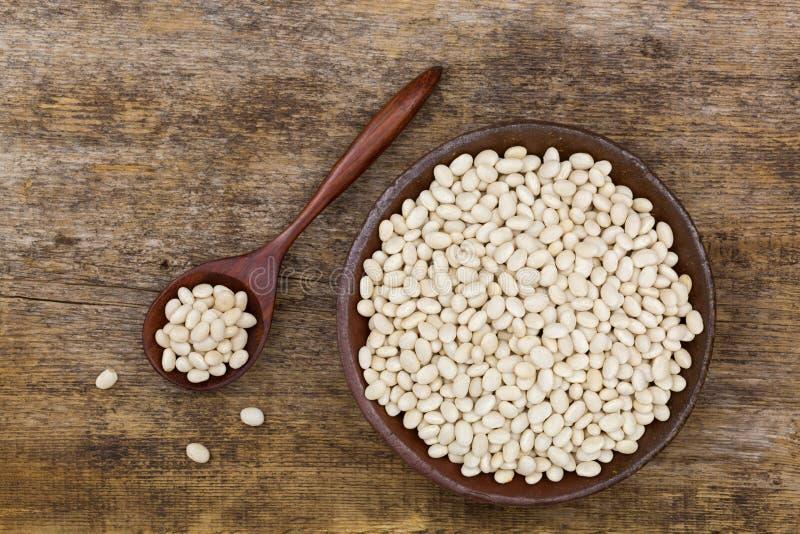 Les haricots nains blancs, également appelés le flageolet, haricot de perle, Boston soient photographie stock libre de droits