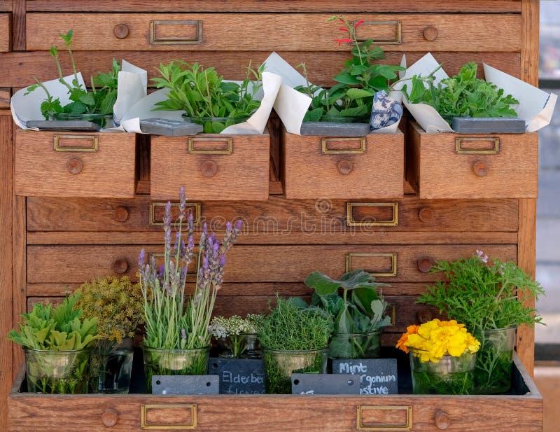 Les herbes fraîches ont présenté dans des pots dans les tiroirs en bois dans une raboteuse image libre de droits