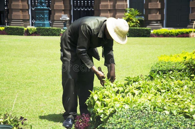 Les hommes thaïlandais travaillent le jardinage et équilibrer l'arbre dans le jardin photo libre de droits