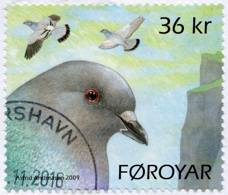 LES ILES FÉROÉ - 2009 : pigeons d'expositions photographie stock libre de droits