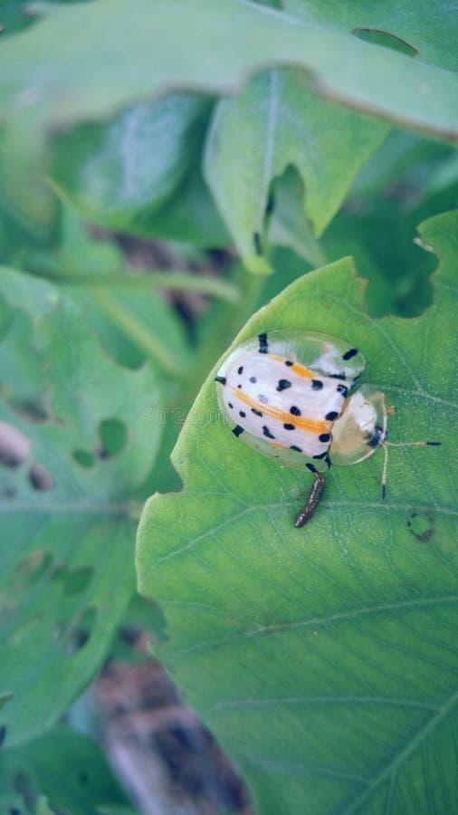 Les insectes mignons image libre de droits