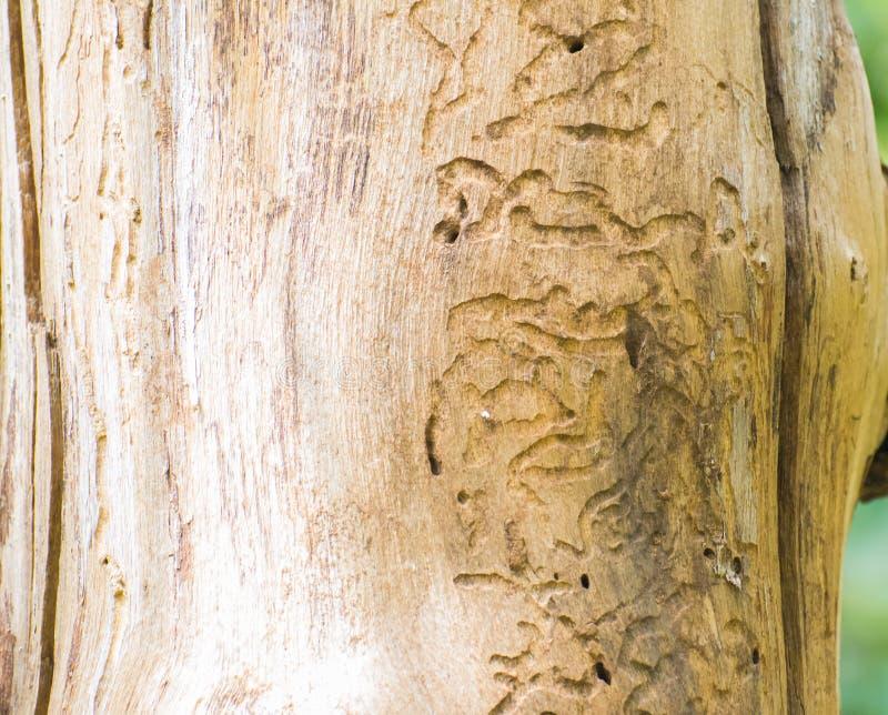 Les insectes modèlent sur le tronc d'arbre images libres de droits