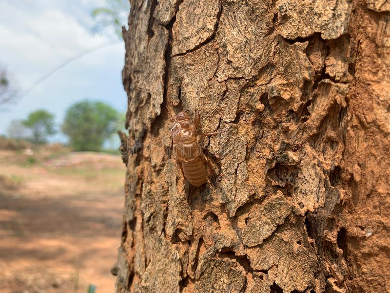 Les insectes muant près de grands arbres s'ajustent selon l'environnement, taches d'insecte images libres de droits