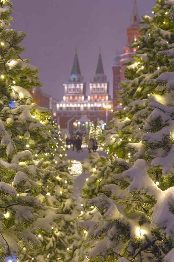 Les installations légères de couleur des sapins d'arbre près de Squre rouge dans la soirée d'hiver image libre de droits
