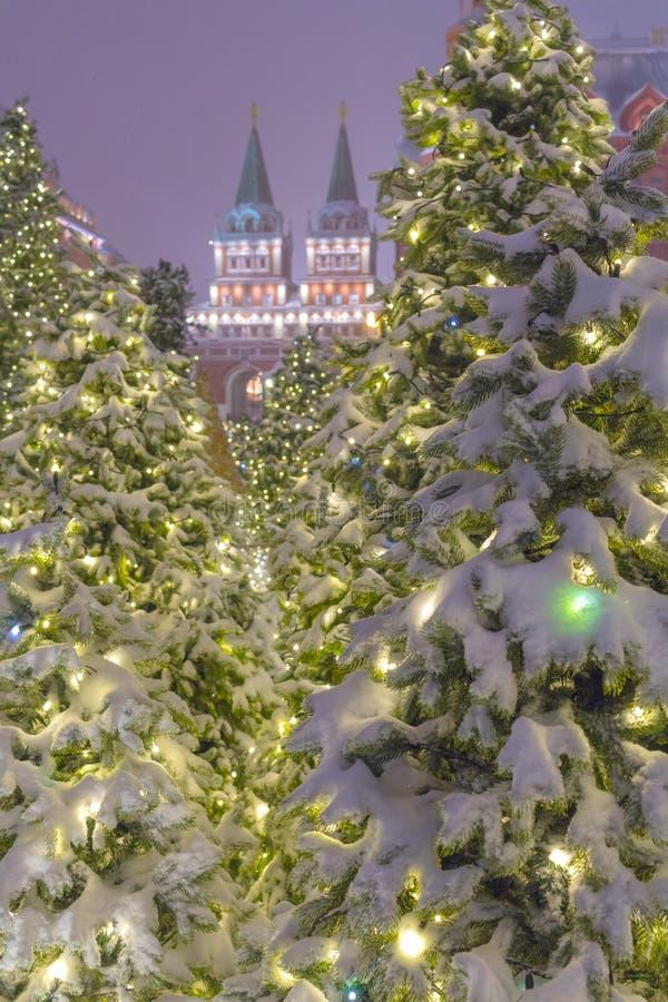 Les installations légères de couleur des sapins d'arbre près de Squre rouge dans la soirée d'hiver photo libre de droits