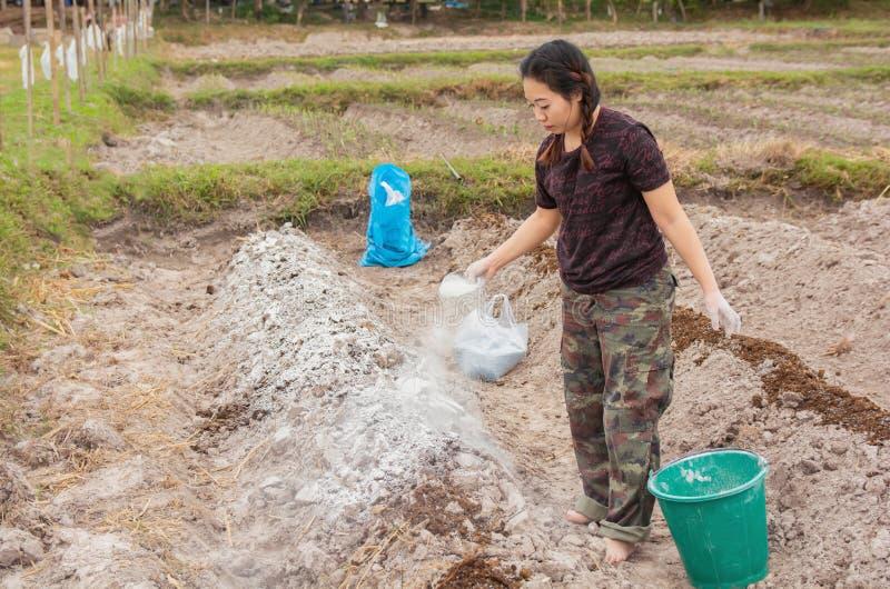 Les jardinières de femme ont mis l'hydroxyde de chaux ou de calcium dans le sol pour neutraliser l'acidité du sol photos stock