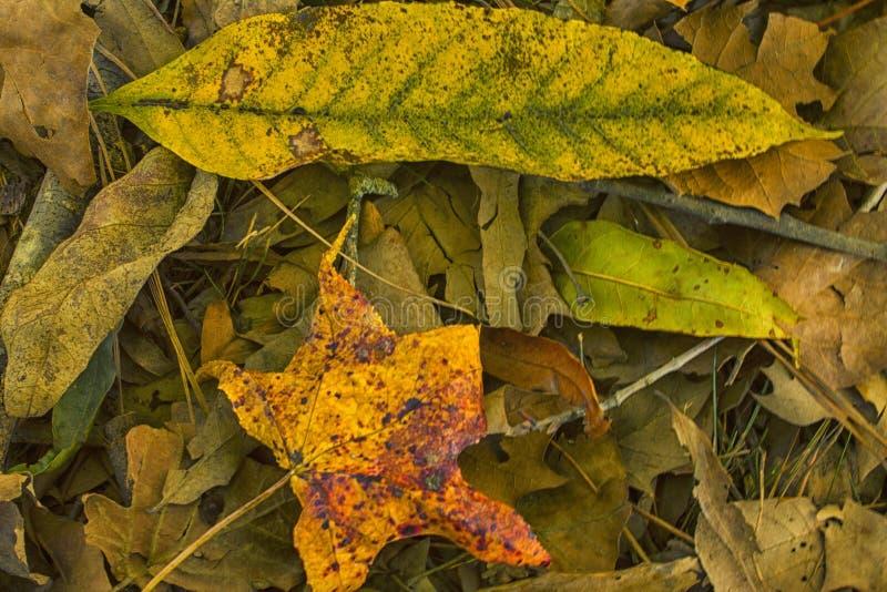 Les jaunes, verts, et peu de rouge d'automne photo libre de droits