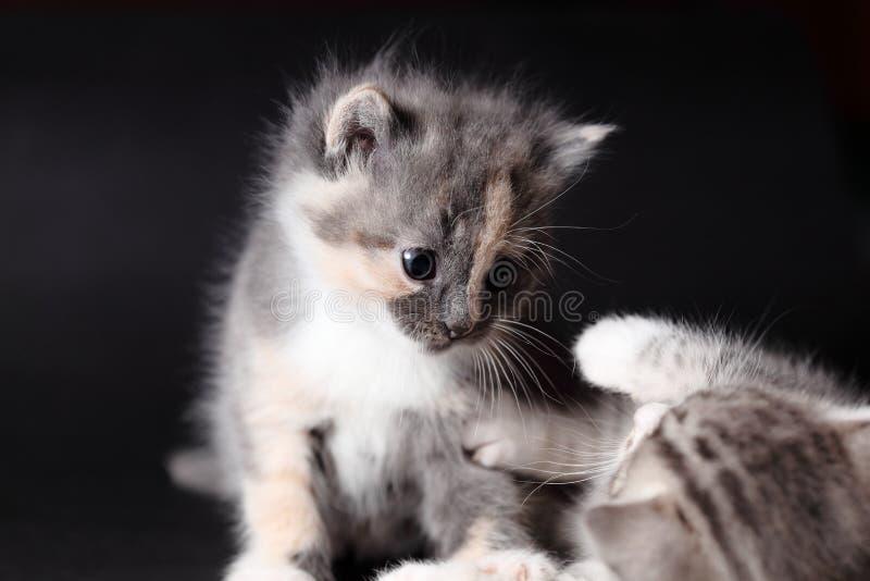 Les jeunes chats jouent image stock