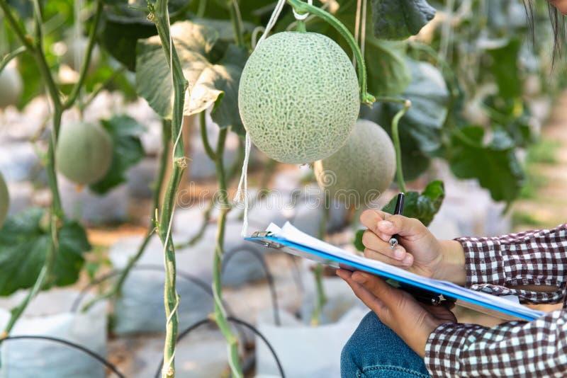 Les jeunes exploitants agricoles analysent la croissance des effets de melon sur des fermes de serre chaude photo stock