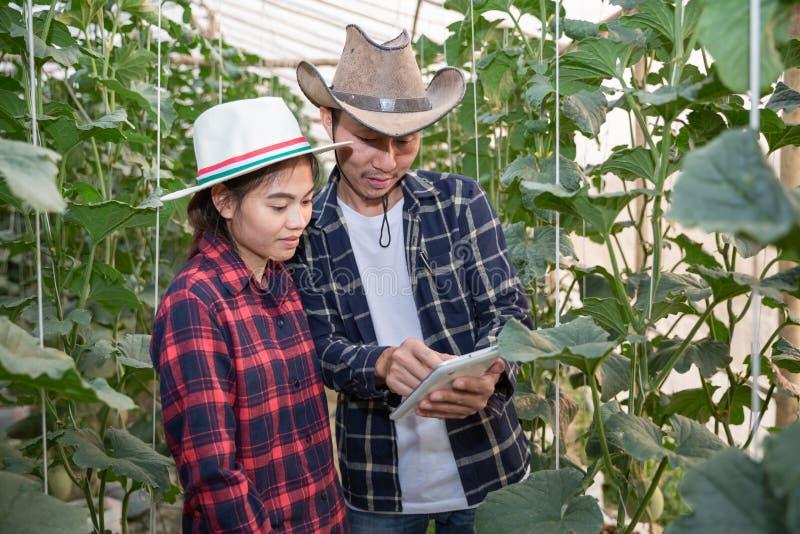 Les jeunes exploitants agricoles analysent la croissance des effets de melon sur des fermes de serre chaude, photos stock