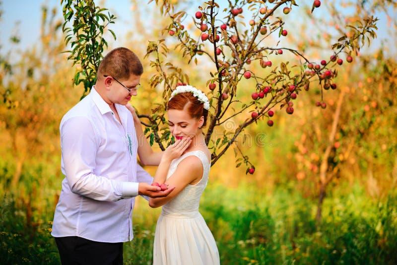 Les jeunes mariés embrassent dans le champ de pommiers, u debout photographie stock libre de droits