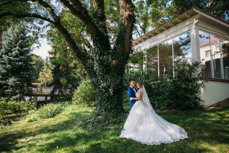 Les jeunes mariés posent sous un grand vieil arbre, le tronc dont est couvert de buissons La jeune mariée dans un long image libre de droits