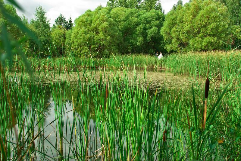 Les jeunes mariés près de l'étang Dans le premier plan il y a d'a photos stock