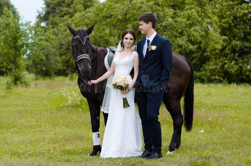 Les jeunes mariés se tiennent en parc près du cheval, épousant la promenade Robe blanche, ajouter heureux à un animal Fond vert photo libre de droits
