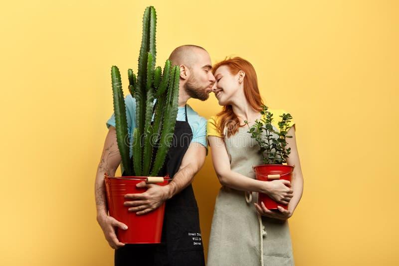 Les jeunes romantiques embrassant dans le fleuriste photos libres de droits
