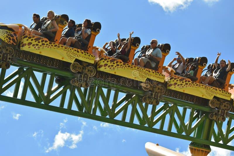 Les jeunes sur le guépard Hunt Roller Coaster des vacances d'été au parc à thème de jardins de Bush images stock