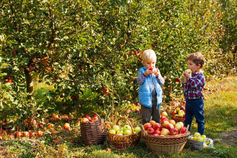 Les jolis enfants mangent des fruits à la récolte de chute photo libre de droits