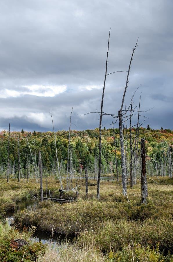 Les jours finaux d'un arbre images stock