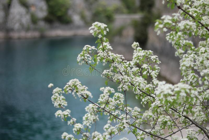 Les jours sereins en nature animent l'âme image libre de droits