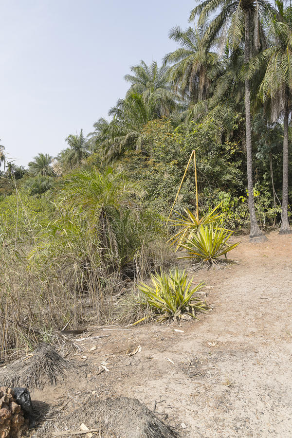 Les jungles image stock