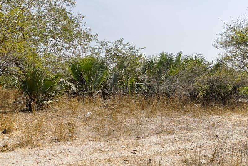 Les jungles photos libres de droits