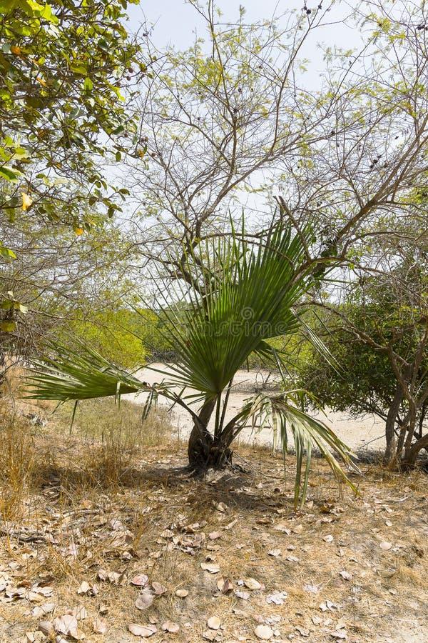 Les jungles photographie stock libre de droits