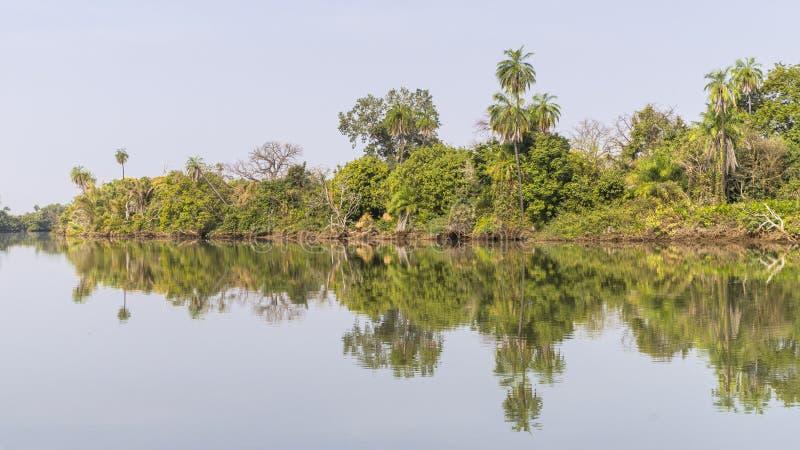 Les jungles et la rivière photographie stock libre de droits