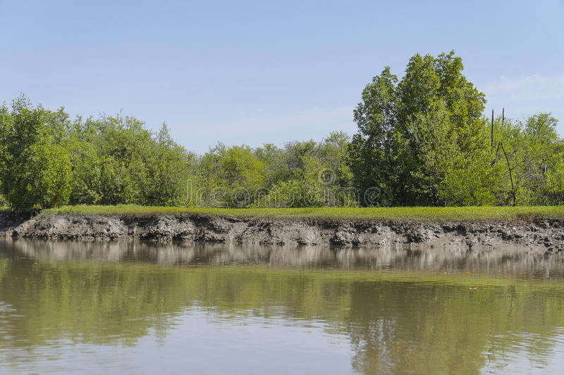Les jungles et la rivière images stock