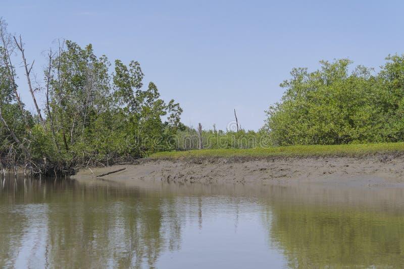 Les jungles et la rivière photo libre de droits