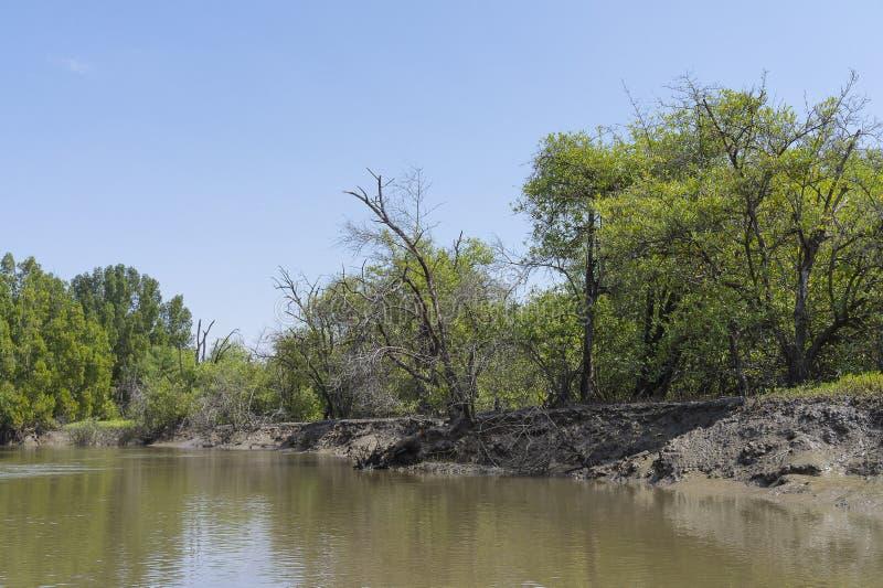 Les jungles et la rivière image libre de droits