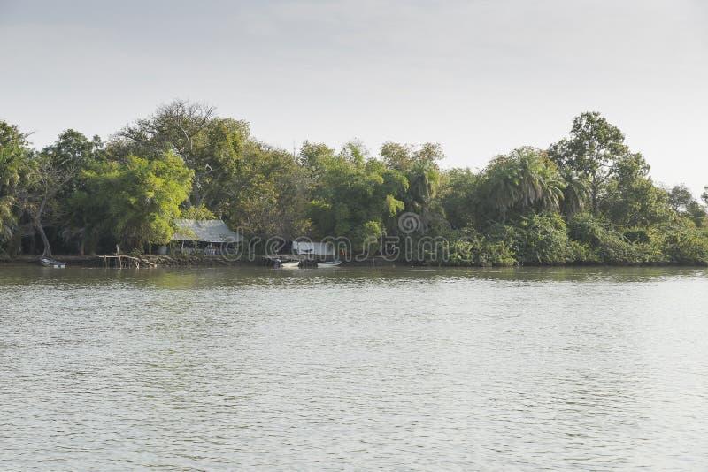 Les jungles et la rivière image stock