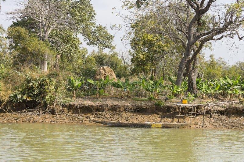Les jungles et la rivière photo stock