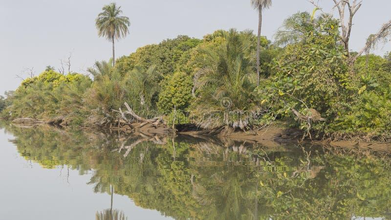 Les jungles et la rivière images libres de droits