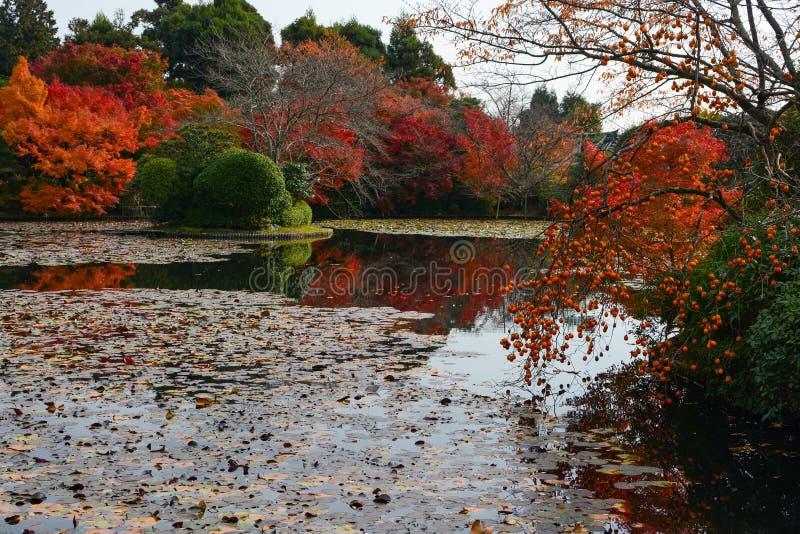 Les kakis mûrs et l'automne ont coloré des arbres d'érable se reflétant dans un bel étang pendant la chute photo stock