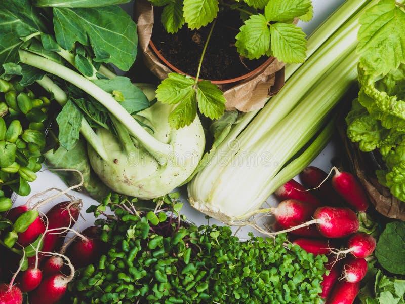 Les légumes frais organiques assortis se ferment  photographie stock
