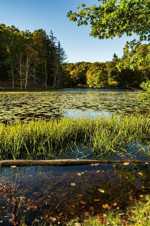 Les lacs mountain se garent images libres de droits