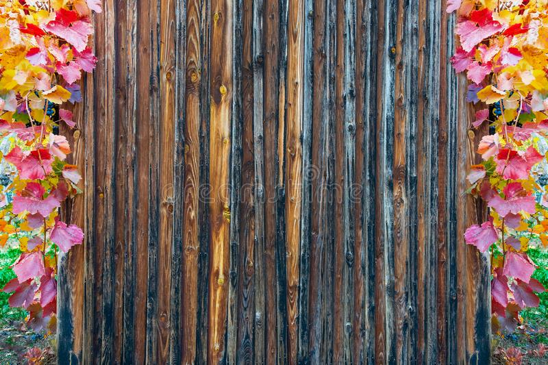 Les lamelles en bois donnent une consistance rugueuse encadré avec les feuilles colorées automnales de vigne photos libres de droits